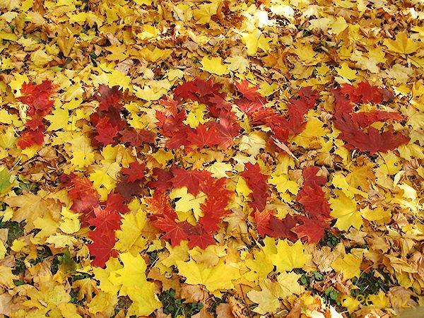 Красивые цитаты про осень