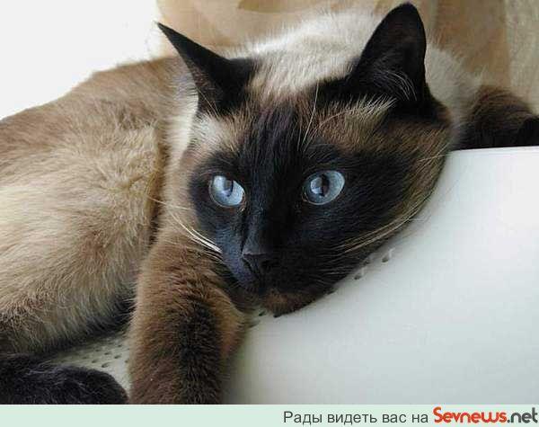 Все породы кошек и котов фото